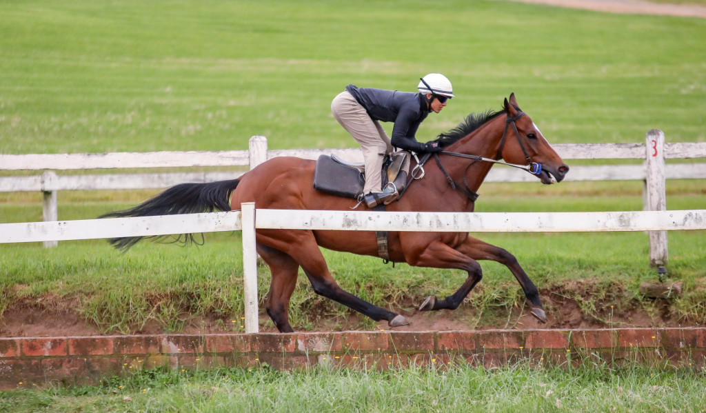 London Call seen in action at Summerveld Training Centre recently. Image: Candiese Marnewick
