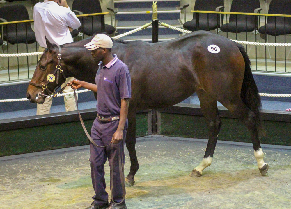 Splat The Cat sold for R100 000 at the 2017 National Yearling Sale. Image: Candiese Marnewick
