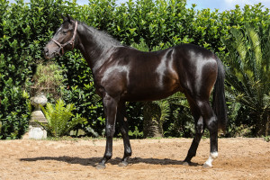 Lot 136 Caero Global View - Lunar Lee