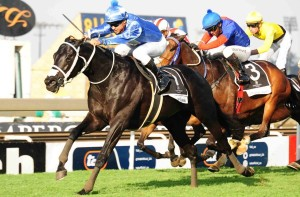 Summerhill Welcome Hat Puntano To Sire Ranks