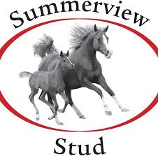 SUMMERVIEW STUD DOUBLY REPRESENTED AT 2YO SALE