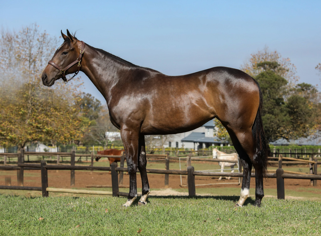 The outstanding Vercingetorix filly sold for R150 000 from Summerview Stud. Image: Candiese Marnewick