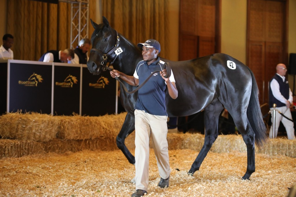 Lot 42 from Hadlow Stud sold for R180 000. Image: Candiese Marnewick