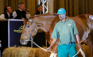 Futura Colt Tops #kznbreds At Day 2 Of KZN Yearling Sale
