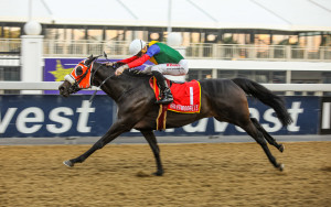 Crusade Hollywoodbets Greyville Double - Find Them At 2YO Sale!