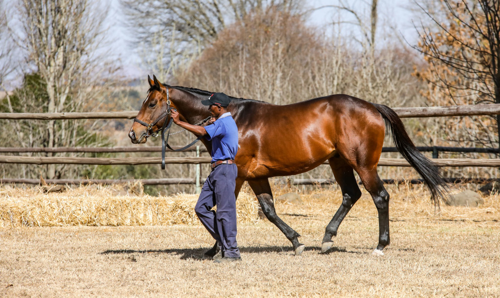 New Predator looking a picture at Bush Hill Stud. Image: Candiese Marnewick