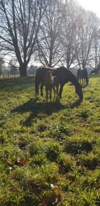 Willow Magic foal
