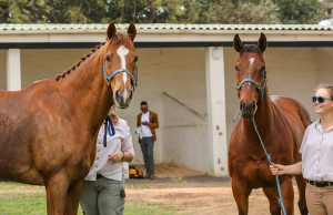 Champion #kznbreds Imbongi and Pierre Jourdan Make Guest Appearance At Greyville