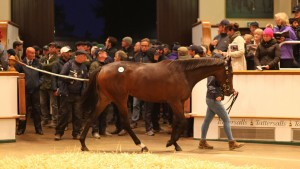 Flying The Flag Relative Makes 7 Figures At Tattersalls October Sale