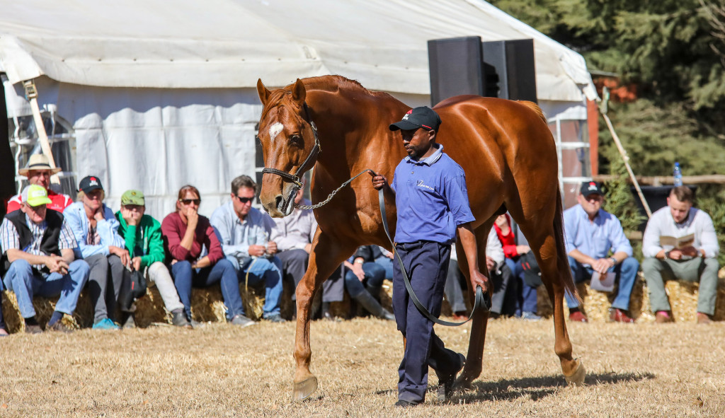 BUSH HILL BRING QUALITY DRAFT TO NATIONAL SALE