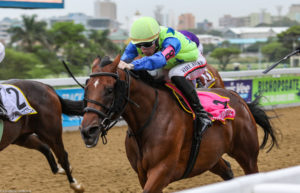 Tales Of Bravery Sister Wins At Greyville