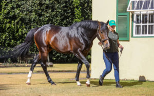 Rabada Relocated To Spring Valley Stud