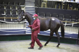 PIEMONTE TO OFFER WELL BRED DRAFT AT NATIONAL SALE