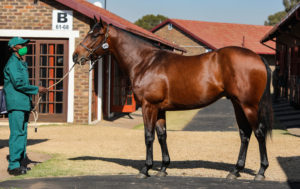 Spring Valley Top KZN Horses At Nationals