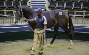 HADLOW STUD BRING FIVE TO 2YO SALE