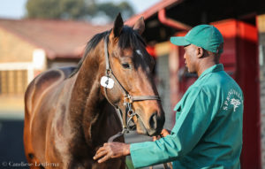 SPRING VALLEY STUD WELL REPRESENTED AT AUGUST SALE