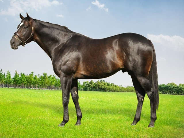 Redoute's Promise (AUS)