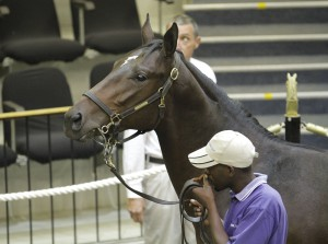 National Yearling Sale Day 2 - KZN Results