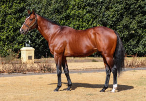 Act Of War Juvenile Colt Debut Win