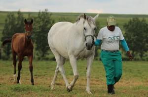 Foals 2016 From Summerhill Stud