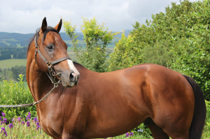 Passing Of Clifton Stud's AP Answer