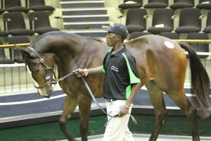 National Yearling Sales Wrap: Rathmor Stud Incredible Sales Results