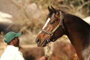 Capetown Noir Filly Takes Ruffian Listed