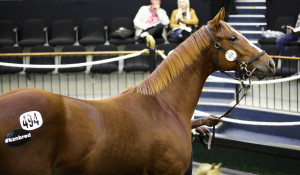 Rathmor Top 3rd Day, Willow Magic Leading First Season Sire Of Nationals