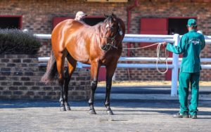 #kznbred Siblings To Black Type Winners For Nationals