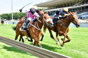 #kznbred Fillies Star At Turffontein