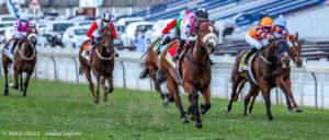 VDJ Log Update - Three #kznbred Horses In Field So Far!