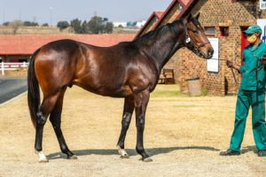 Blue Sky Thoroughbreds Top Day One Of KZN-breds At August Sale